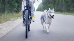 Tracking shot of a girl with a young Siberian Husky in nature Stock Footage