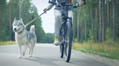 An obedient cheerful dog training with a girl Stock Footage