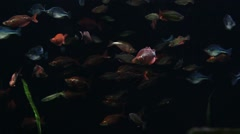 Nices and colorful mixed fishes in a big aquarium Stock Footage