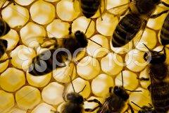 Insekten Bienen Stock Photos