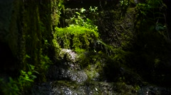 Natural spring dripping on the rock . Clear forest waterfall . Stock Footage