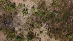 Aerial heath, shot straight down and climbing Stock Footage