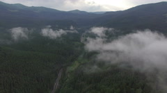 Flight over the mysterious dark forest in the fog Stock Footage