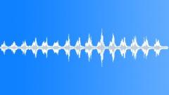 Birds Various Peacock Vocal Calls Rhythmic Squawks Medium Close Exteri Sound Effect