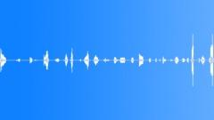 Animals Buffalo Bison Vocal Growls Smooth Series Walk Slow Bird Chirp Sound Effect