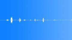 Animals Buffalo Bison Vocal Moans Smooth Series Walk Slow Bird Chirps Sound Effect