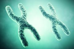 XX Chromosome in the foreground, a scientific concept. 3d illustration Stock Illustration