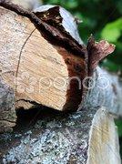 Holzrinde Stock Photos