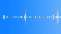 Animals Cows Heifer Vocal Calls Low Throaty Roar Sudden Desperate Sno Sound Effect
