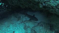 Divers swim underwater between reefs. Diver check level of oxygen. Sharks Stock Footage
