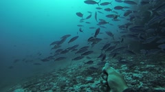 Divers underwater with aqualungs. Blue water. Deepness. Colony of fish. Sealife Stock Footage