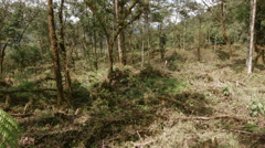 Pan across montane rainforest partially cleared for cattle pasture.  Stock Footage