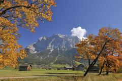 Zugspitze Mountain Range and Maple Trees in Autumn, Lermoos, Tyrol, Alps, Stock Photos