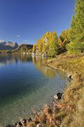 Autumn Landscape and Shoreline, Silsersee, Engadin, Canton of Graubunden, Stock Photos