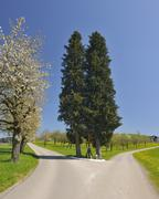 Forked Country Road with Wooden Cross, Tettnang, Baden-Wurttemberg, Germany Stock Photos