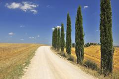 Rural Road lined with Cypress Trees in Summer, Monteroni d'Arbia, Siena Stock Photos