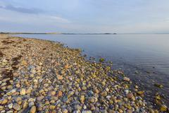 Pebble Beach in Evening, Fyns Hoved, Hindsholm, Kerteminde Municipality, Funen, Stock Photos