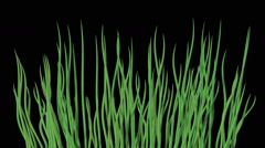 Waving water grass generated seamless loop video with alpha matte Stock Footage