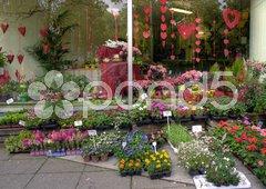 Blumensortiment und Dekoration mit roten Herzen zum Valentinstag vor Blumenladen Stock Photos