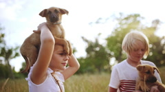 Beautiful children stroking, playing, walking with puppies in park at sunset Stock Footage