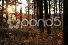 Herbstlicher Buchenwald Stock Photos