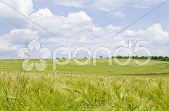 Landschaft im Sommer mit Himmel und Kornfeld Stock Photos