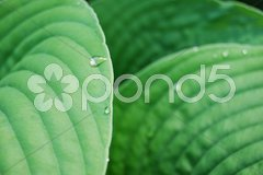Leafs with waterdrops Stock Photos