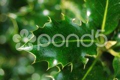 Mistletoe Stock Photos