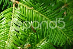 Closeup of an interesting structured brightly green leaf with shallow depth of f Stock Photos