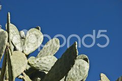 Closeup of a huge cactus with many thorns Stock Photos