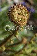 Closeup of a fern in a garden Stock Photos