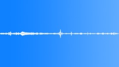 Birds South America Hummingbird Trill Flutter Low Rumble Various Birds Sound Effect