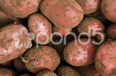 Red potatos Stock Photos
