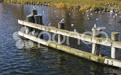 Seagulls sitting on a pier in winter Stock Photos