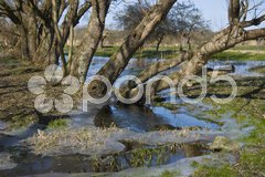 Trees standing in a frozen pond in winter Stock Photos