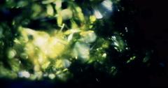 Light Leaks Element 88 Stock Footage