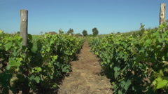 Rustic Old Vineyard Deep In The French Countryside In The Loire Valley. Stock Footage