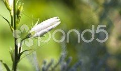 White flower Kuvituskuvat