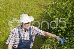 Gartenarbeit, Mann schneidet Hecke Stock Photos