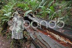 Im Wald Stock Photos