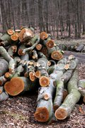 Holzstapel im Wald Stock Photos