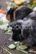 Kaninchen Stock Photos