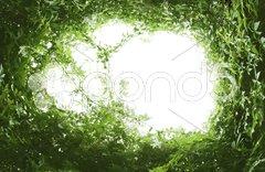 Green leaf frame Stock Photos