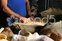 Arbeiter auf einer Kakaoplantage füllt Kakaobohnen in Säcke Stock Photos