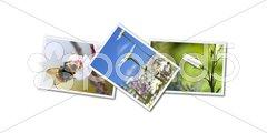 Photos Stock Photos