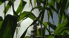 Watering A Corn Field Using High Pressured Sprinkler Stock Footage