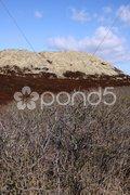 Dünenlandschaft auf Sylt Stock Photos