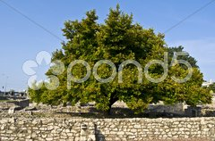 Aquincum Stock Photos