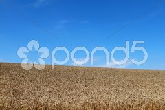 Getreidefeld Stock Photos