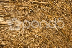 Closeup on straw pressed together in a bale Stock Photos